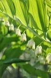 自然春天,绿色,花,庭院 免版税库存照片