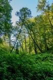 自然曲拱在森林里 库存照片