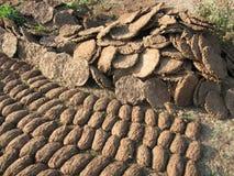自然最佳的母牛粪的肥料 库存图片