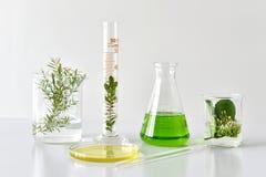 自然有机植物学和科学玻璃器皿,供选择的草本医学,自然护肤美容品 库存图片