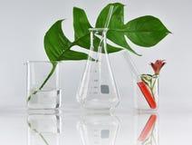 自然有机植物学和科学玻璃器皿,供选择的草本医学,自然护肤美容品 免版税图库摄影