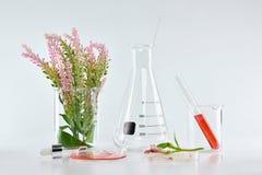 自然有机植物学和科学玻璃器皿,供选择的草本医学,自然护肤美容品 免版税库存图片
