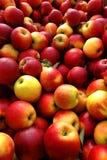 自然有机苹果散装在农夫市场上 免版税库存照片