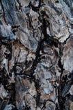 自然木吠声样式或纹理 老概略的树褐色自然木抽象背景 免版税库存图片