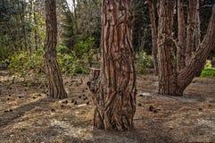 自然木纹理在公园,树皮肤有树在庭院里,抽象背景被弄脏的背景  库存照片