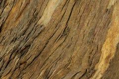 自然木背景,树皮纹理  免版税库存照片