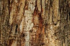 自然木背景,树皮纹理  库存图片