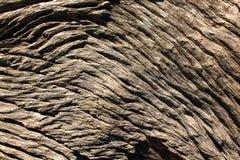自然木表面、抽象背景和纹理 免版税库存照片