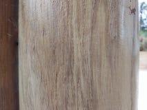 自然木头树 库存图片