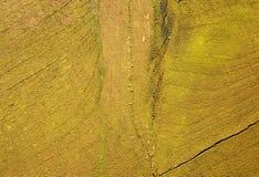 自然木绿色背景 免版税库存照片