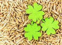 自然本底套燕麦基地酿造与三叶草欢乐卡片patricks毛毡叶子  免版税库存图片