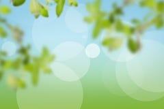 自然本底由绿叶制成 免版税图库摄影
