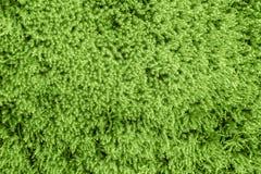 自然本底,在森林早autum的青苔,年2017年绿叶pantone的颜色15-0343个TCX 免版税库存图片