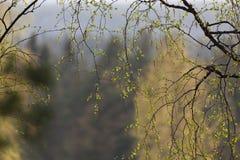 自然本底,春天分行 免版税库存照片