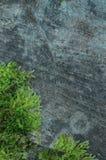 自然本底-生苔木头 库存图片
