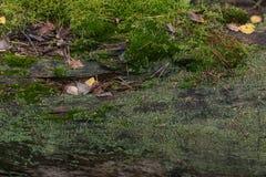自然本底 图库摄影