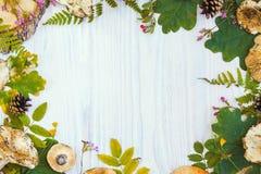 自然材料美好的框架,蘑菇,锥体,蕨,莓果 秋天白色木背景 图库摄影