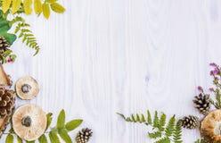 自然材料美好的框架,蘑菇,锥体,蕨,莓果 秋天白色木背景 免版税库存照片
