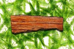 自然标签木叶子的孤立 免版税图库摄影