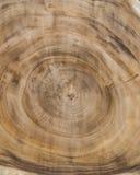 自然树木纹理  免版税库存图片
