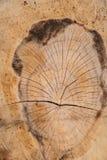 自然树样式木头纹理 库存图片