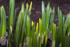 自然树植物绿色 图库摄影