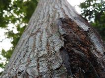 自然树的吠声的关闭视图奇迹  免版税库存照片