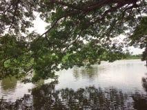 自然树的风景河 图库摄影