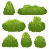 自然树篱,从事园艺绿色灌木 动画片灌木和灌木在白色背景隔绝的传染媒介集合 皇族释放例证