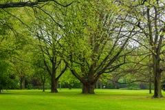 自然树草雨 免版税图库摄影