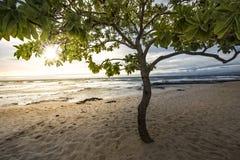 自然树荫 库存图片