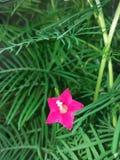 自然桃红色花图象 免版税库存图片