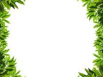 自然框架绿色的叶子 库存照片