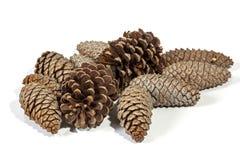 自然棕色松树锥体样式和纹理 免版税库存图片