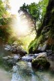 自然森林山小河;用绿色青苔盖的岩石; 图库摄影