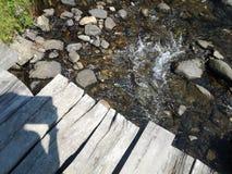 自然森林溪 免版税库存图片