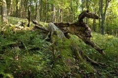 自然森林生态系 库存图片