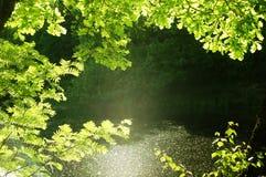 自然森林的框架 免版税图库摄影