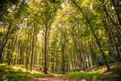 自然森林背景 图库摄影