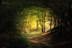 自然森林隧道路 图库摄影