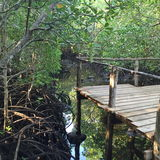 自然森林非洲 免版税库存照片