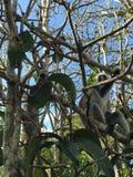 自然森林非洲 库存图片