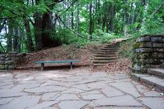 自然森林 图库摄影