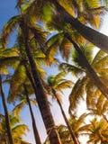 自然植物印度生叶绿色摄影 免版税库存照片