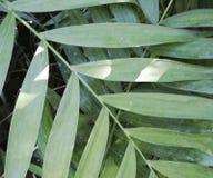 自然植物有sunlights背景 免版税库存照片