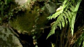 自然植被在Cabreia葡萄牙 股票录像