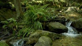 自然植被在Cabreia葡萄牙 股票视频