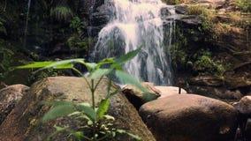 自然植被在Cabreia葡萄牙 影视素材