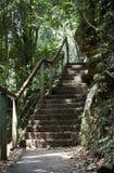 自然楼梯 图库摄影
