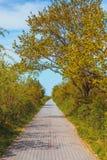自然概念,边路在绿色公园 免版税库存照片